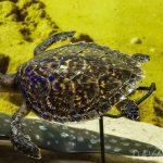 【News】ダバオ市長、ウミガメの保護を推進