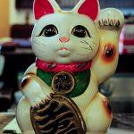 【News】ニャンコ好きにはたまらない!休日を楽しく過ごすのにぴったりな猫カフェ
