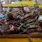【News】長引くモンスーン、援助を切望する漁師たち