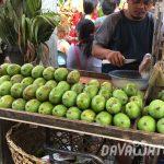 【News】ダバオ地方、マンゴーの生産量が増加