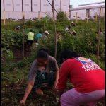 【News】ダバオ市、コーヒーの品質アップにハワイの農法を導入?
