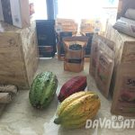 【News】ダバオ産カカオの需要拡大が顕著に