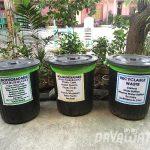 【News】ダバオ市消費者団体、再生プラスチックの積極的な使用を提唱
