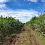 【News】フィリピン農業省、ダバオ市の漁業や農業の発展に向けて400万ペソの助成金