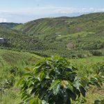 【News】生産性アップ!ココナッツの収穫量を増やす技術