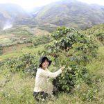 【特集】フィリピン最高峰アポ山の秘境にあるコーヒーの名産地に行ってきた話