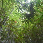 【News】ダバオ市議会で植林や森林公園を守る条例が制定、年1回の植林活動実施が求められることに